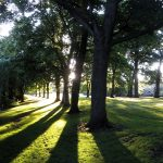 Avenue of trees at Kirkstall Abbey Park